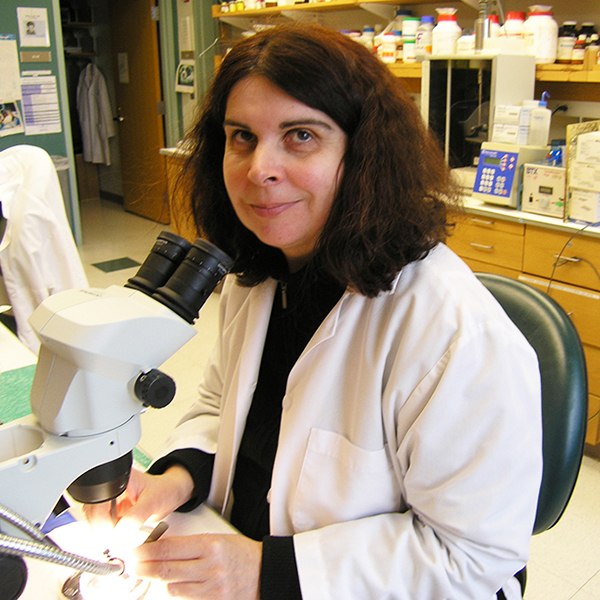 Jelena Mojsilovic-Petrovic MD, PhD